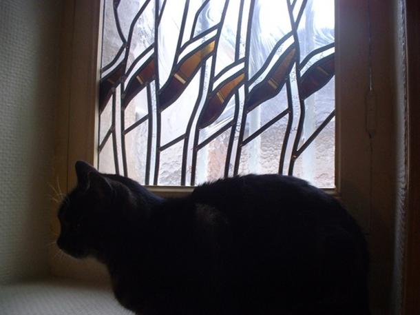 Rideau pour chat