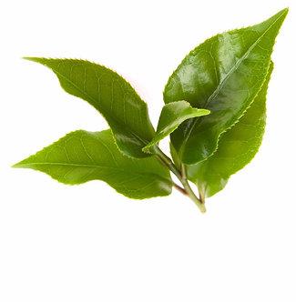 Green Tea Extract | EGCG | VEGPHARM | VEGSCI