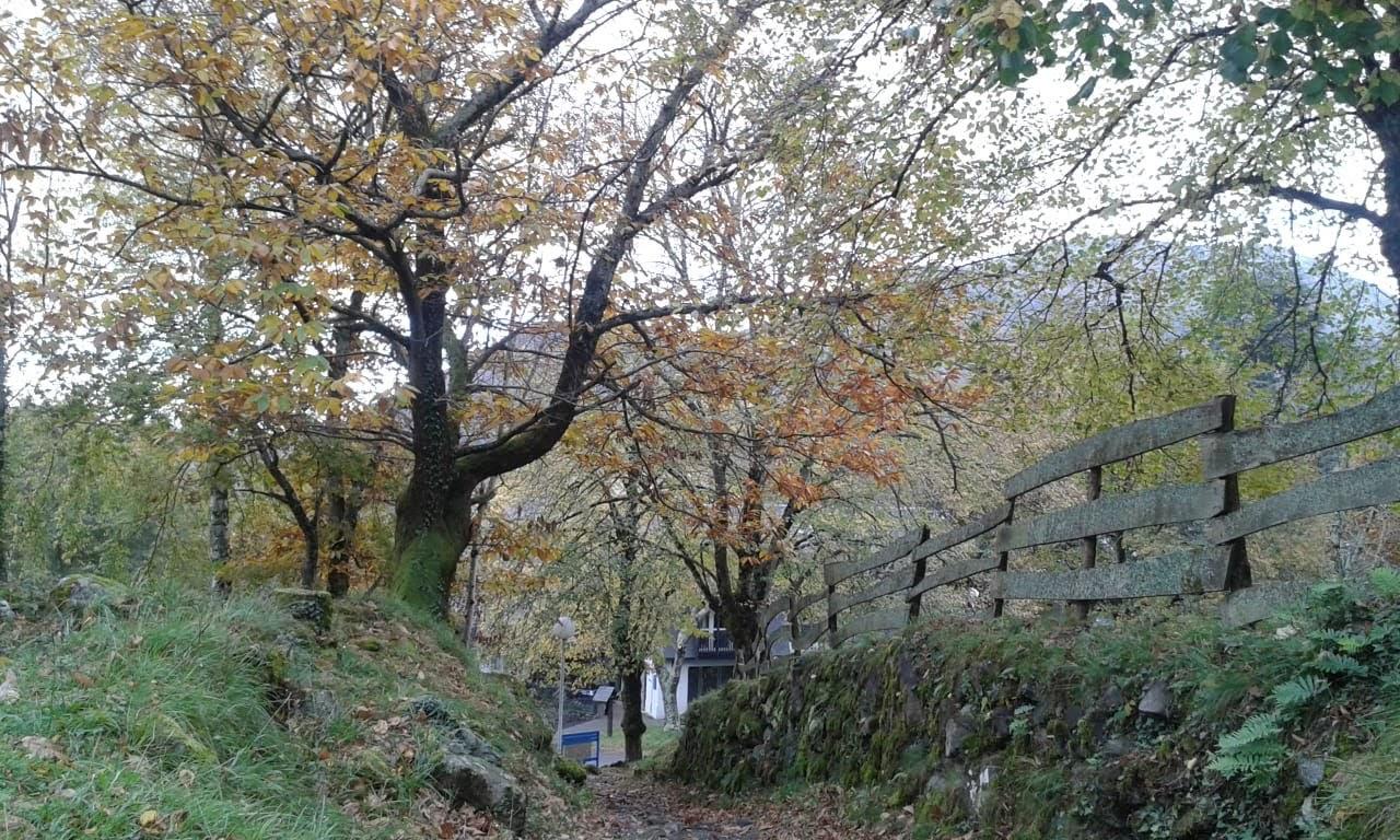 L'automne 2018 à la cité