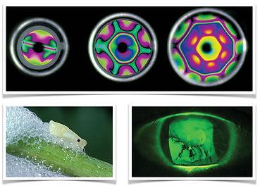 Ultafast organismic biophysics