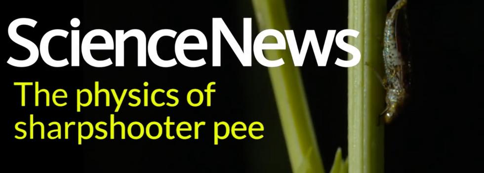 Physics of sharpshooter pee - ScienceNews
