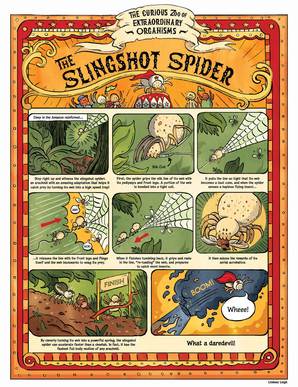The Curious Zoo of Extraordinary Organisms. Comic on Slingshot Spider. Bhamla Georgia Tech 2020