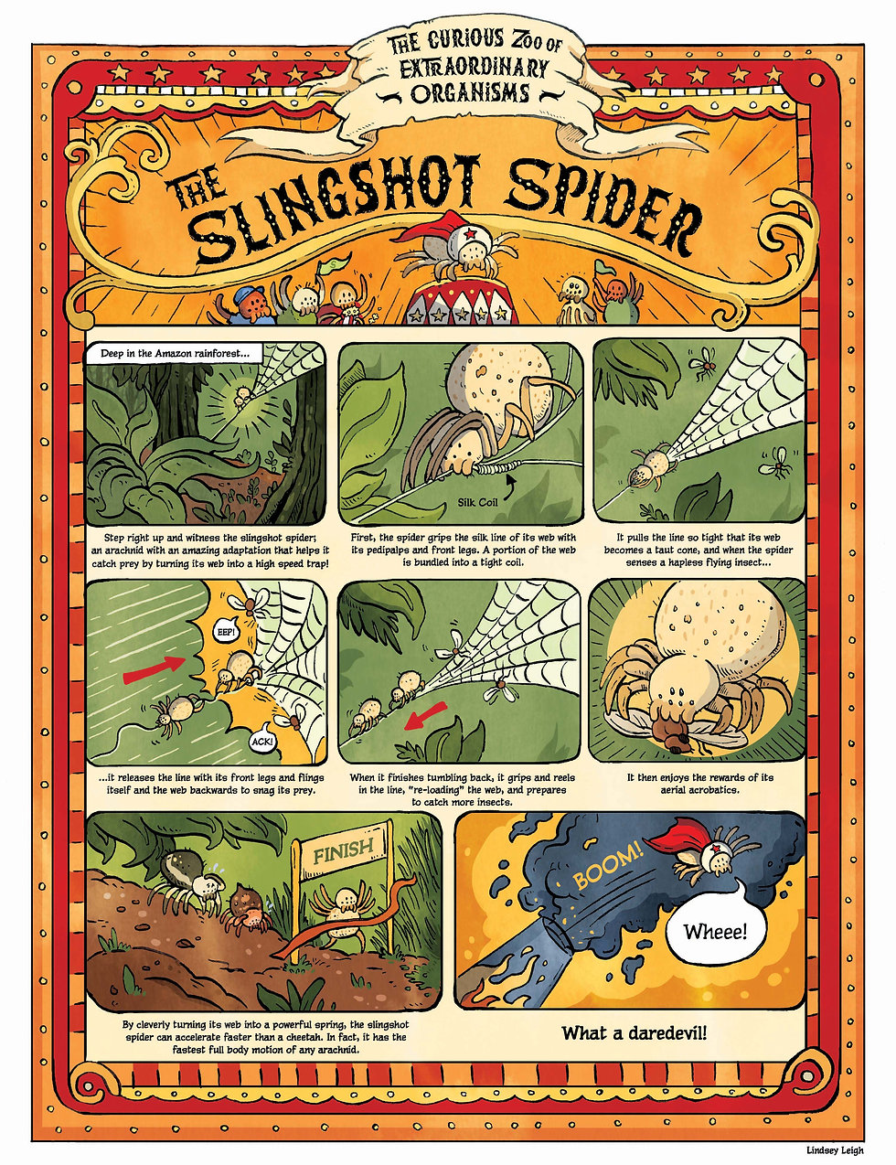 The Curious Zoo of Extraordinary Organisms. Comic on Slingshot Spider. Bhamla Georgia Tech 2020