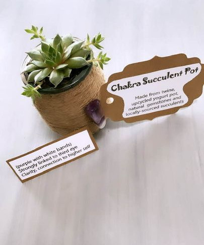 Back To School Plant To Help With Memory? It's True.