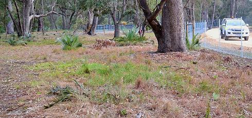 Bushland, Remnant bushland, Natural area management, Environmental offset, Revegetation