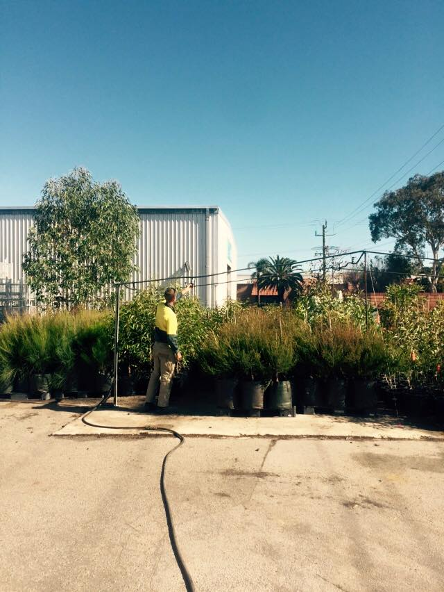 Caring for native trees