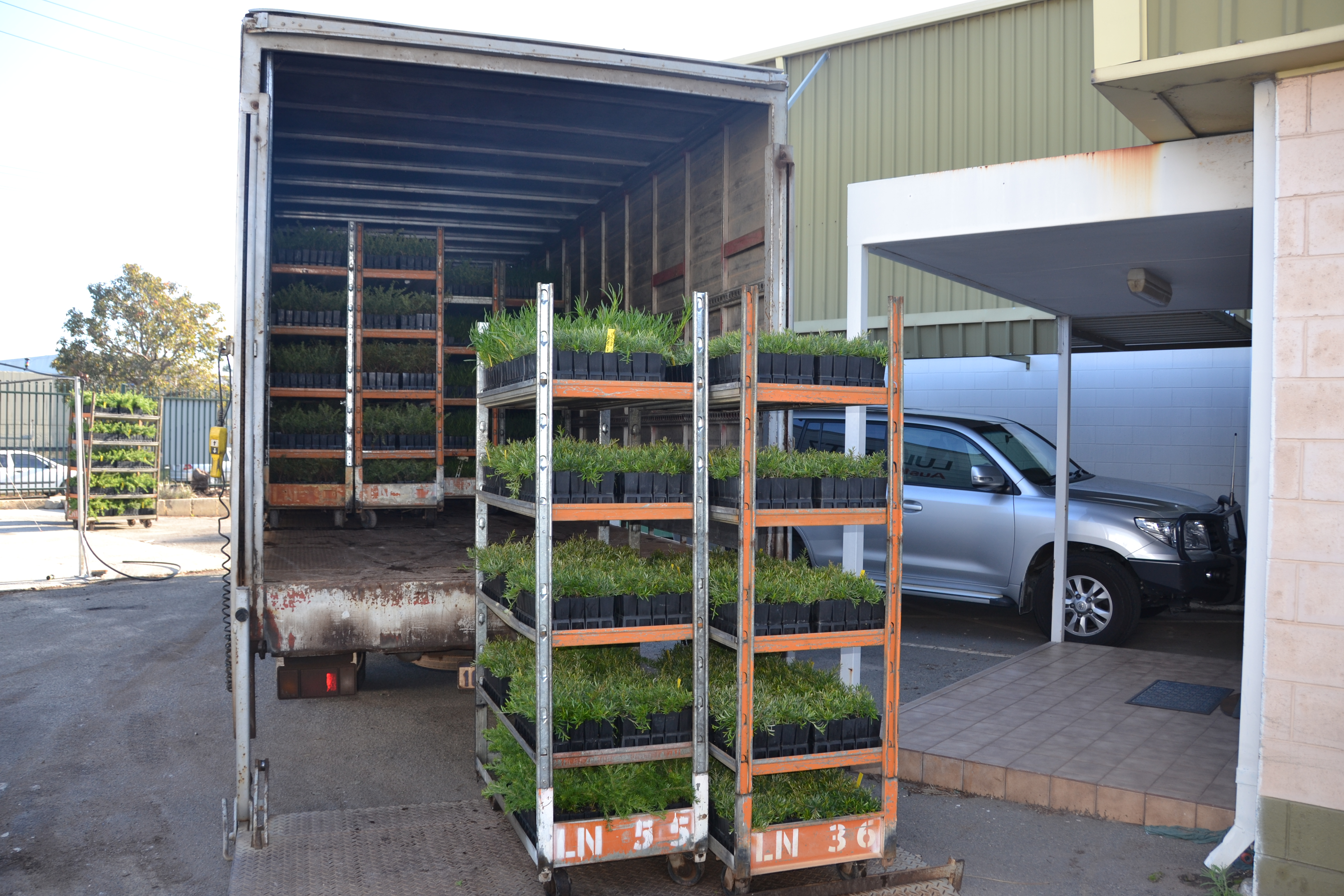 Delivery of seedlings from nursery