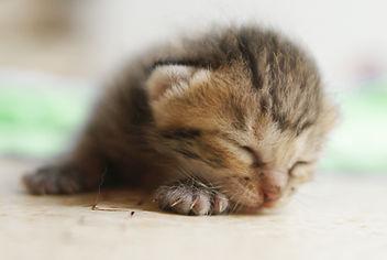 寝ている子猫.jpg