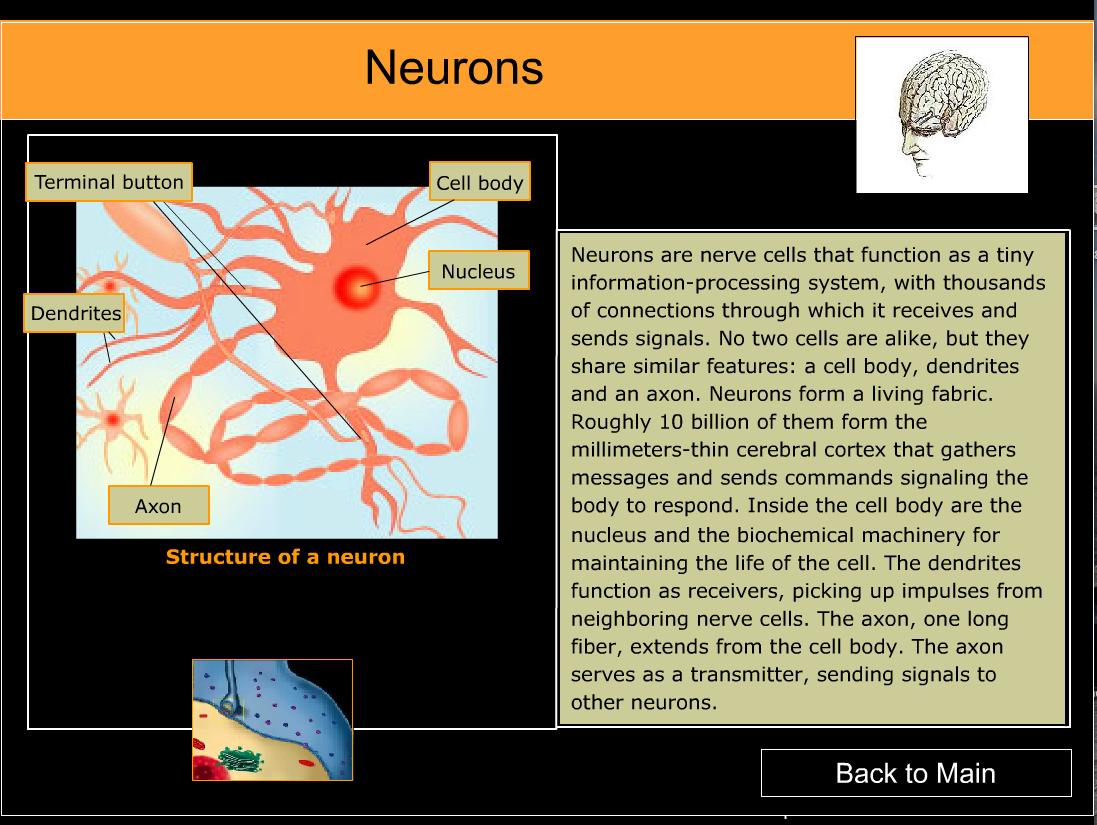 Neurons 1