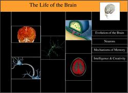 Brain Home
