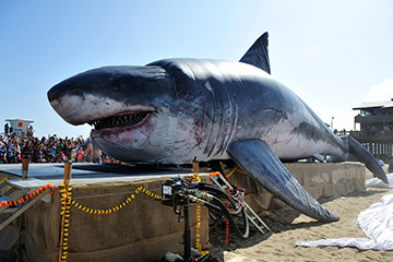 50' Shark for Shark Week