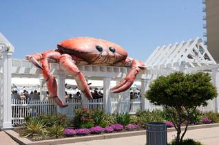 15' Crab on Patio