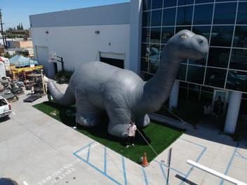 50' Brontosaurus