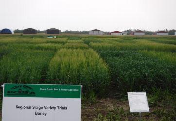 Regional Silage Variety Trials: 1. Barley Varieties
