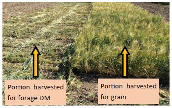 Assessment of Soil Rejuvenation, Seed Germination and Foliar Fertilizer Products for Barley
