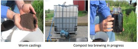 GSR Ca and Compost Tea on Forage Yield & Quality