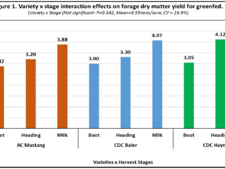 Forage DM Yield and Nutritional Value of Oat Varieties Harvested at 3 Stages of Maturity