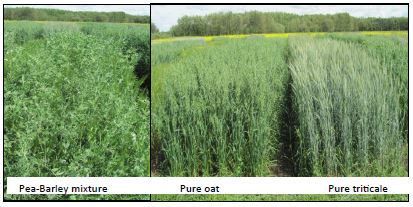 Pea - Cereal Mixtures for Forage Yield and Quality
