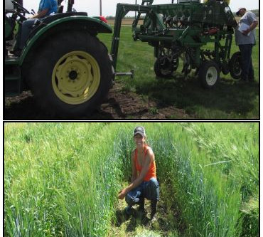 Forage Type Barley Varieties for Forage Yield & Quality