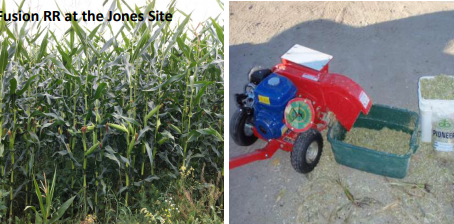 Extending the Grazing with Corn: Corn Hybrids, Forage Yield and Feed Value