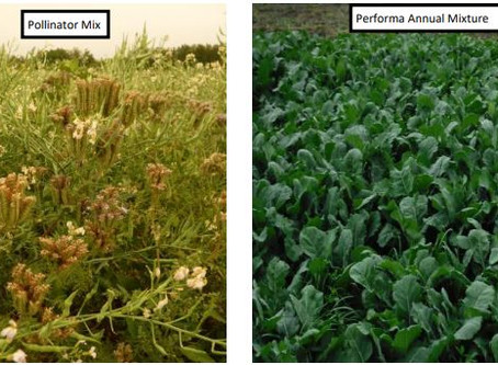 Demonstration of Annual Forage-Type Cover Crops and Perennial Forages