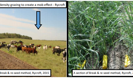 Evaluation of pasture rejuvenation methods to determine the most effective & profitable method