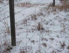 Wildlife Control Using 3-D Fencing : Bush Line