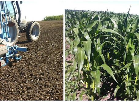 Corn Seeding Rates Trial