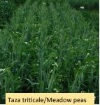 Regional Silage Variety Trials: 4. Pea-Cereal Mixtures