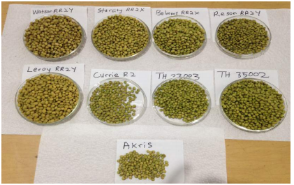 Preliminary Testing of Soybean Varieties for Seed Production
