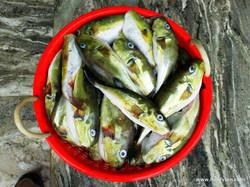 Munambam_Kerala Nov 10, 2009 2-49