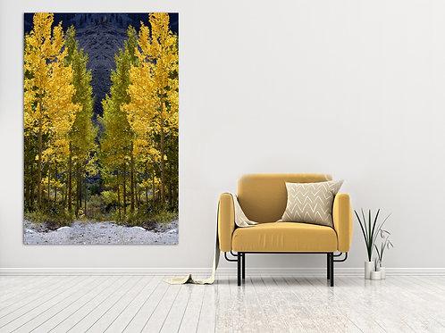 Half Yellow And Half Green Fall Trees line Colorado  Pass Wall Art Canvas 16x20