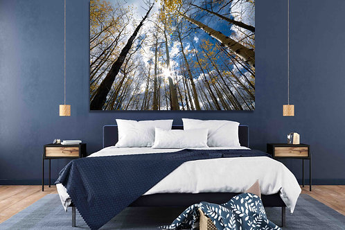 Aspen Trees Sun within and beautiful sky