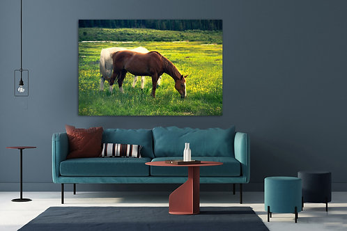 Horse Art Photography,  Canvas Print, Original Shot, Horse Lovers, Horse Canvas,