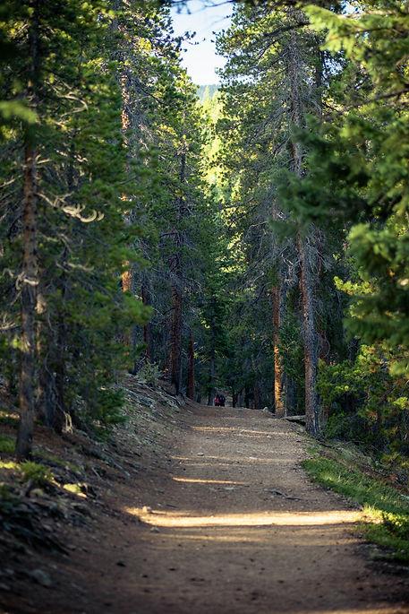 Evergreen Black Forest .jpg