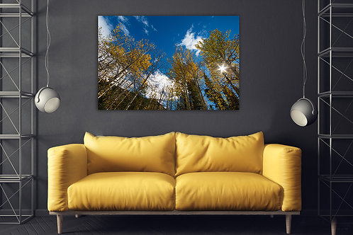 Aspen Trees Giclee with sunlight in Wall Art Canvas 20x16