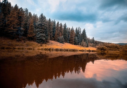 High Peak Trees  Reflection on water - G