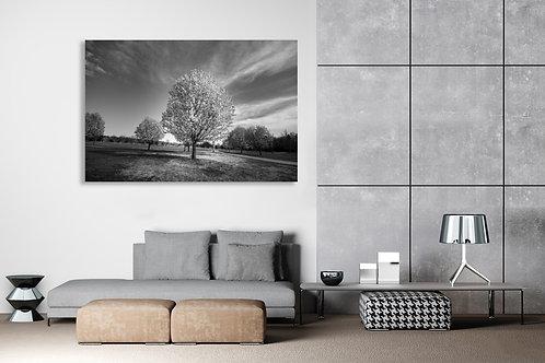 B & W Sole Autumn Apple Tree Wall Art Canvas 20x16
