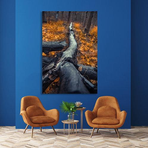 Fallen Tree Trunk Among Golden Yellow Fall Trees Wall Art Canvas 16x20