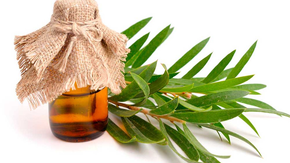 Aceite Esencial de Arbol de Té