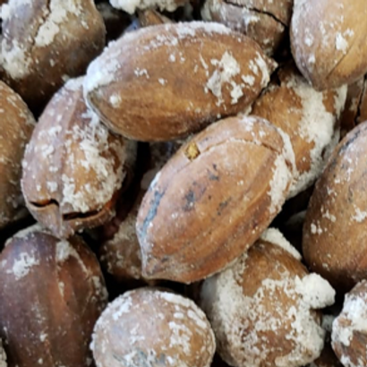 Whole Pecan Roasted Salted in Shell (Per Pound)