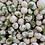 Thumbnail: Wasabi Peas (Spicy) (Per Pound)