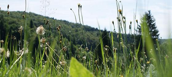 Gîtes auvergne nature randonnée