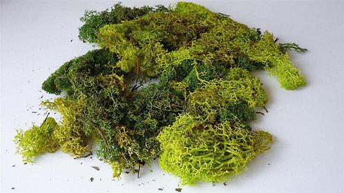 Javis Scenics Model Lichen Bulk Pack