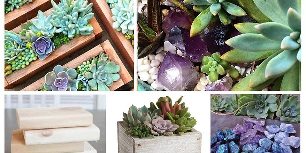 Succulent & Crystal Gardens (1)