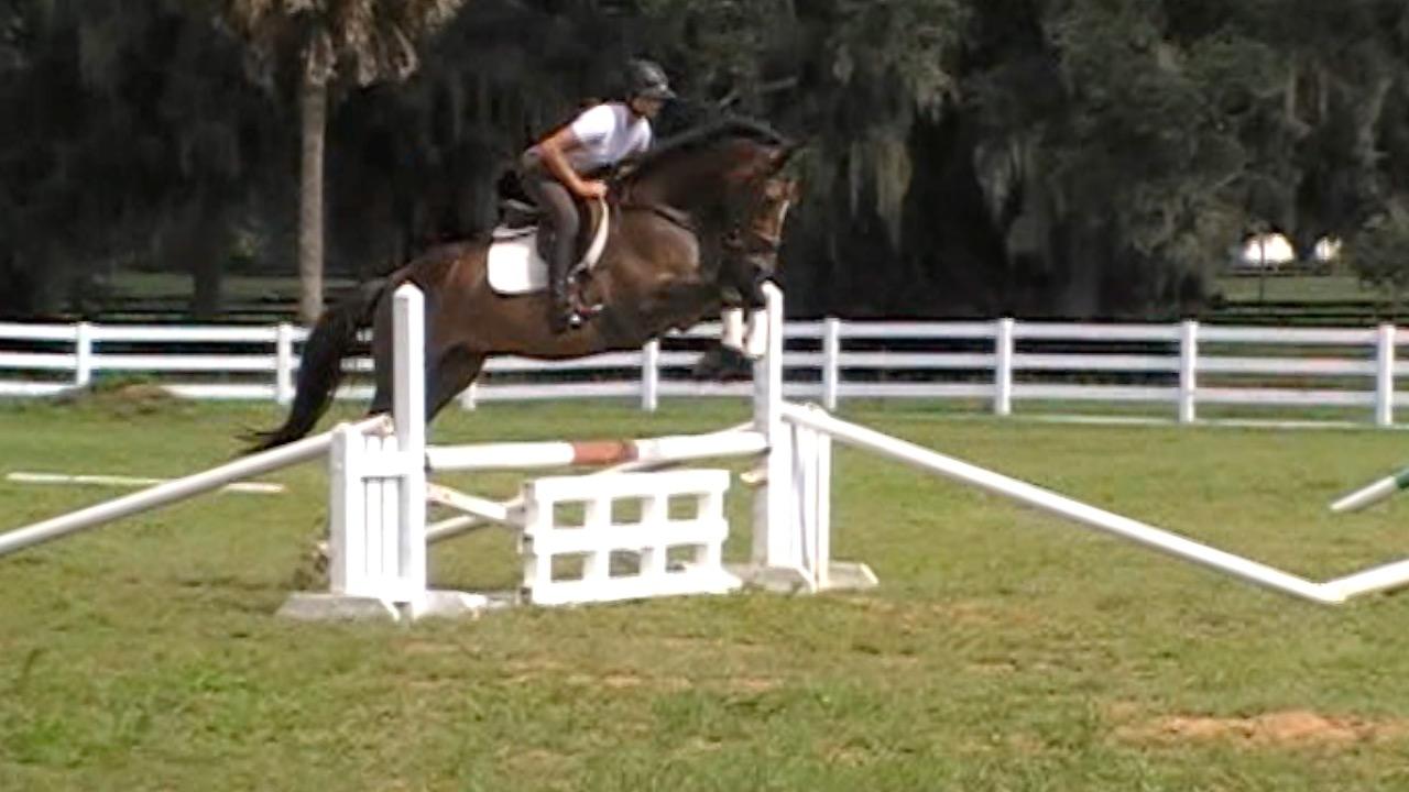 Hatari Jumping under saddle1