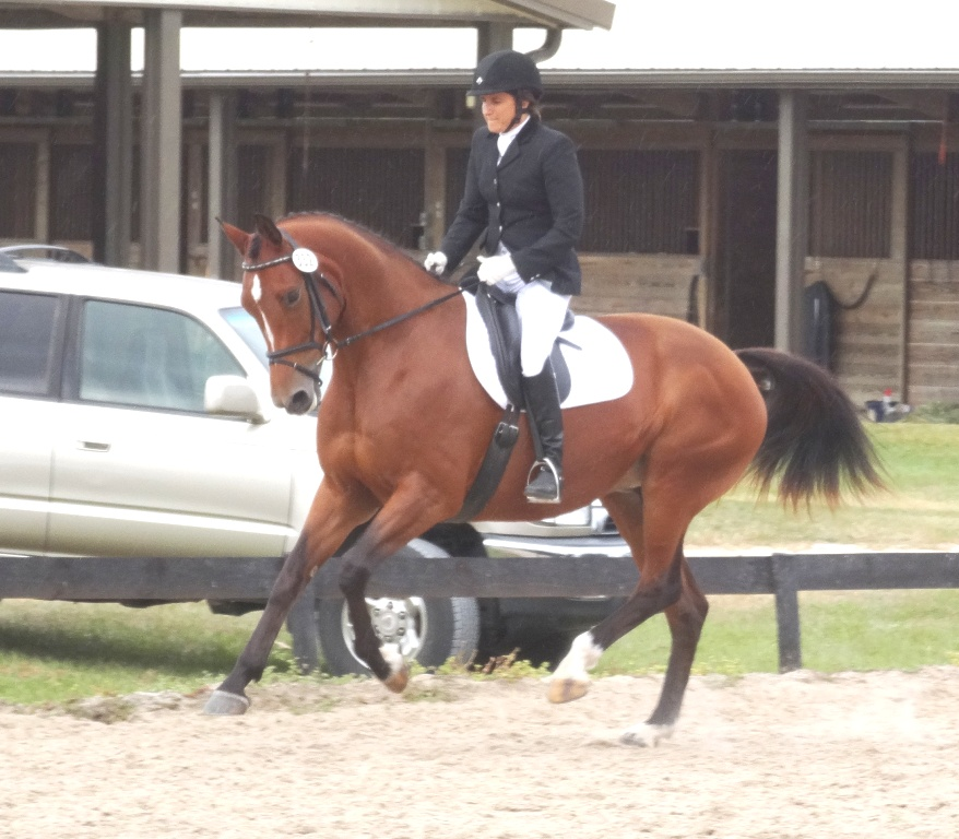 Maya's Dressage Training