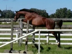 Katch Jumping