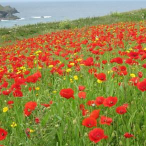 Spotlight on the North Cornwall coast