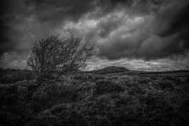 Windswept Bodmin Moor